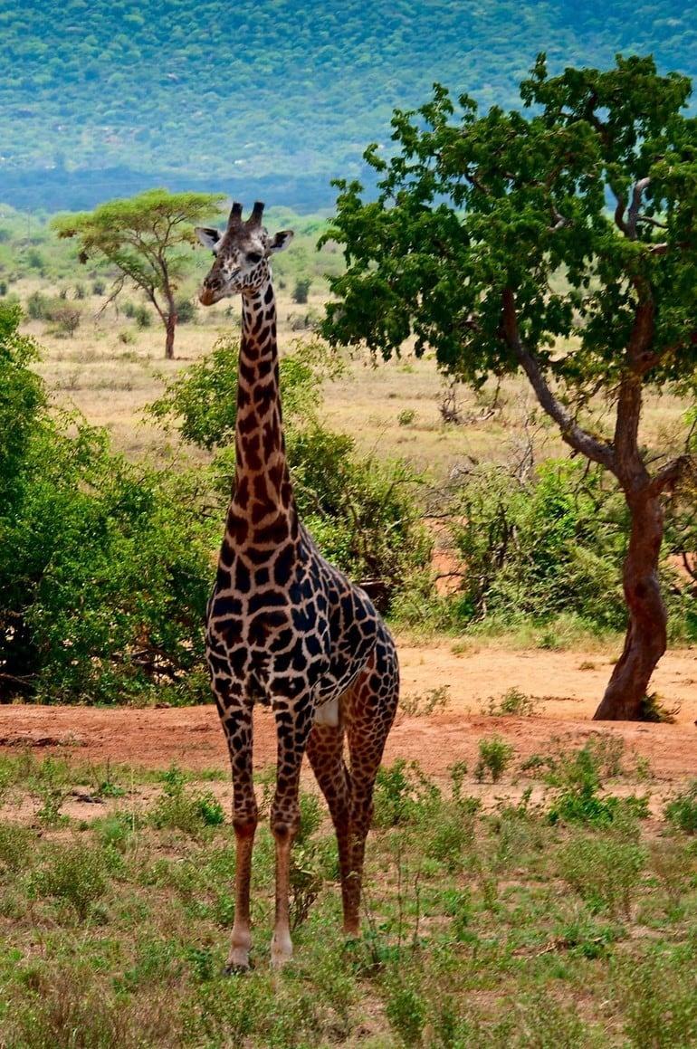 Kenia zimą tonaprawdę ciepłe miejsce