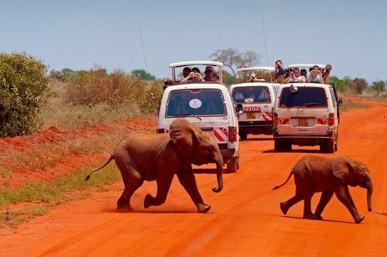 Dziko żyjące słonie nasafari zimą