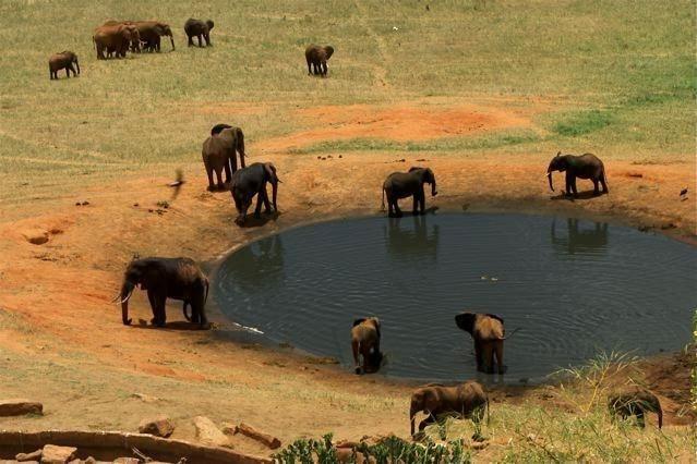słonie przy wodopoju wtsavo east