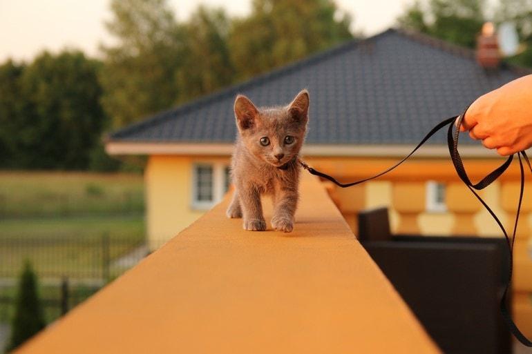 kot nasmyczy