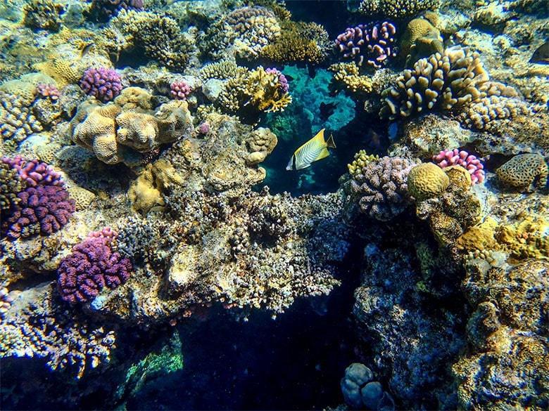 Rafa koralowa przy hotelu