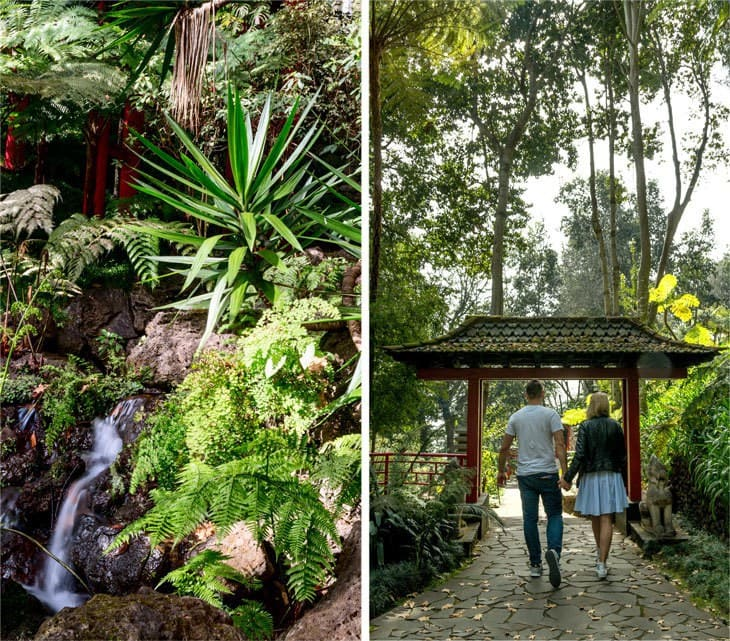 Madera - monte tropical garden