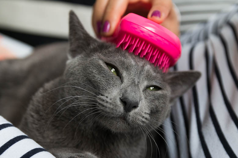 kot i tangle teezer