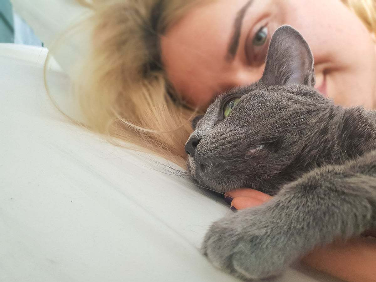 Drugi Kot W Domu Dieta Kota Zdrowy Styl życia Kota Wg Behawiorysty