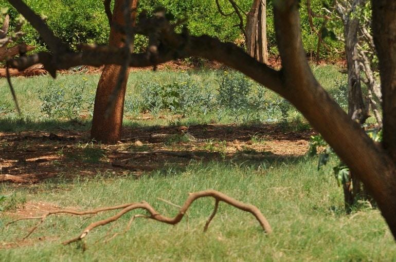 gepard wkenii